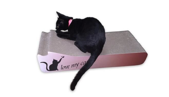 how to re-litter box train a cat